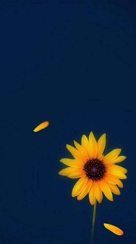 Download Sunflower Wallpaper Iphone Cikimm Com