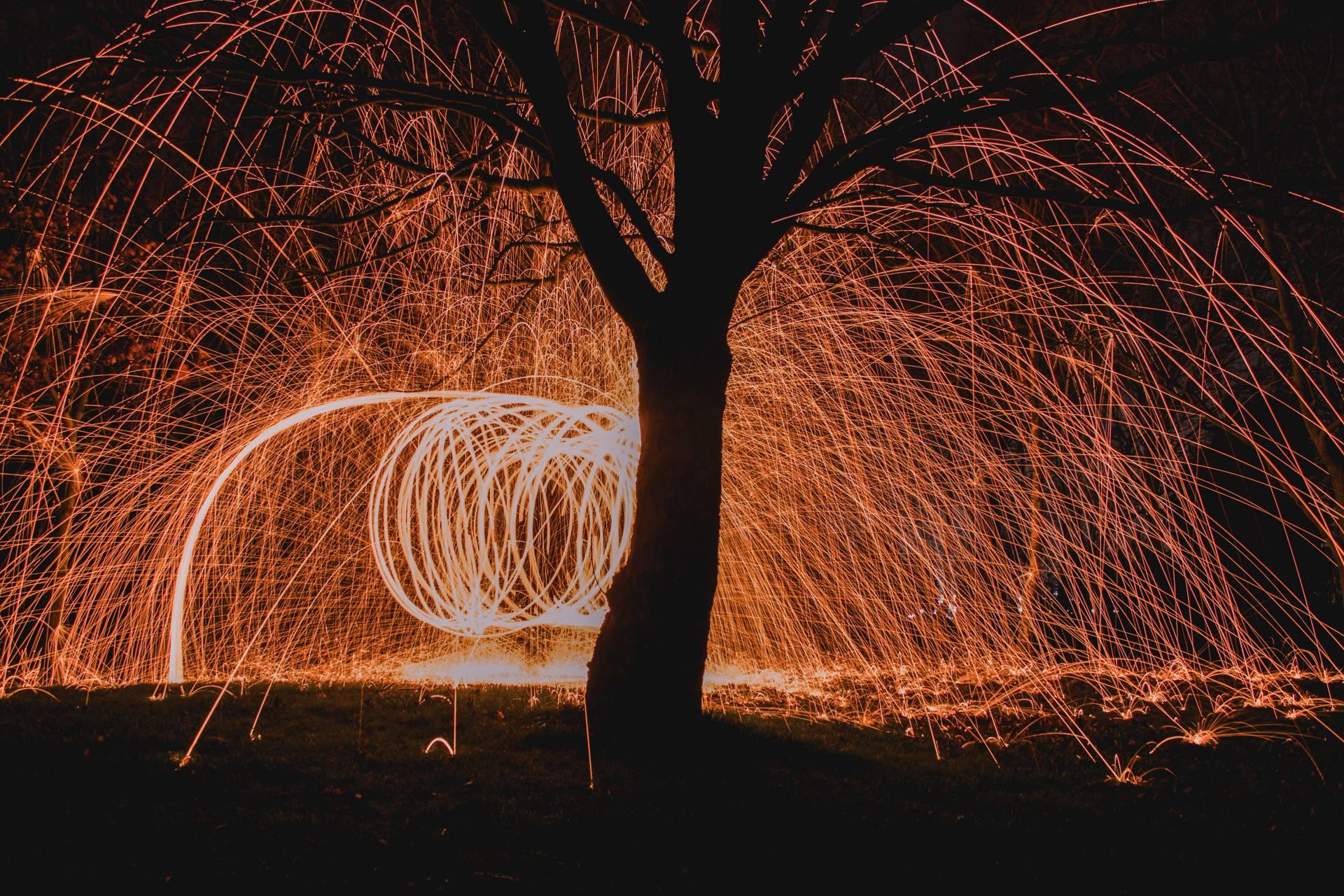 Tree wire wool