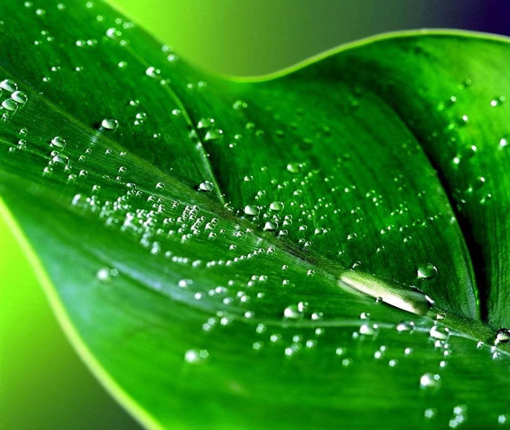 Green Dewy Leaf
