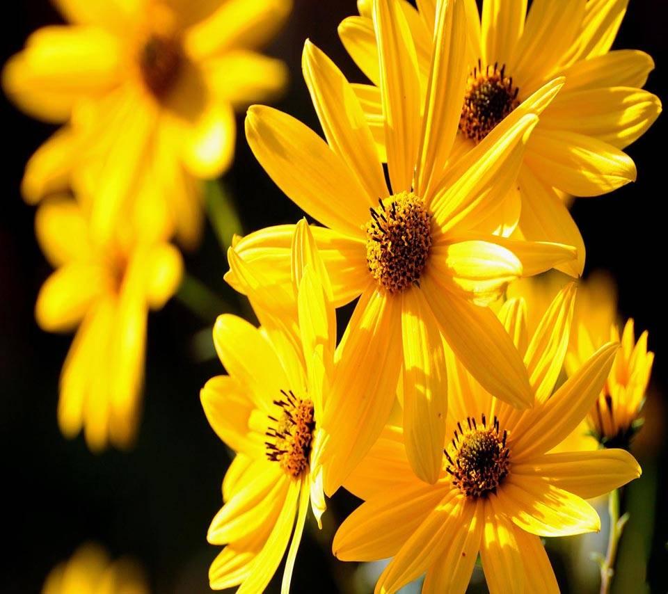 Yellow Petals Nature