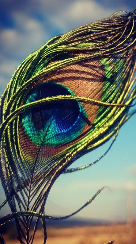 Peacock Feather Wallpapers Free By Zedge