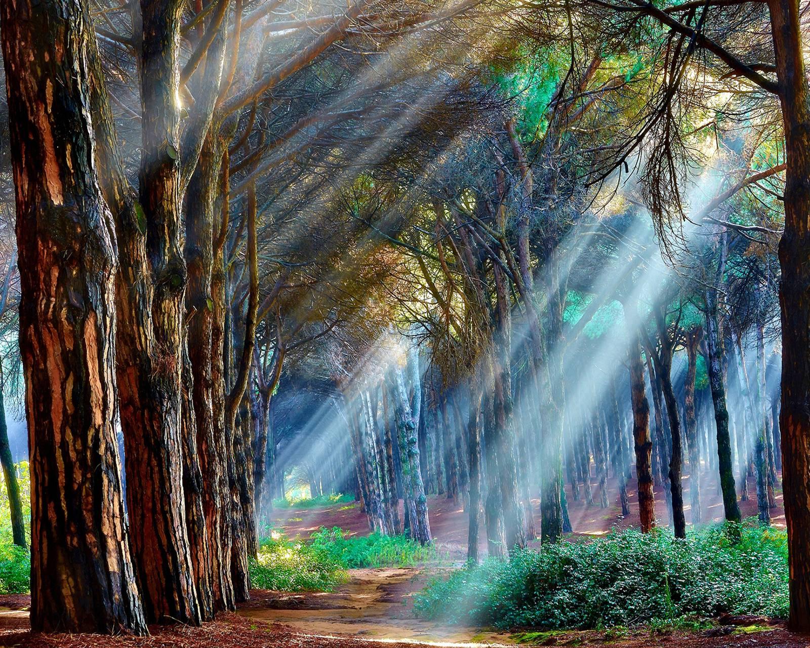 Amazing sunlight