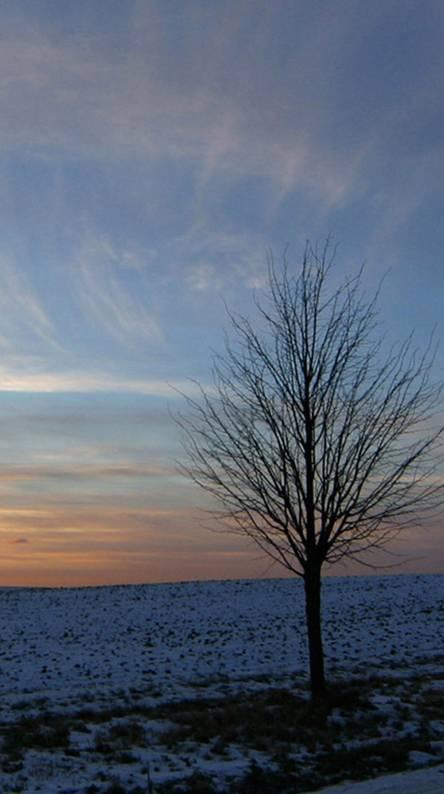 Xperia Z Winter Sky