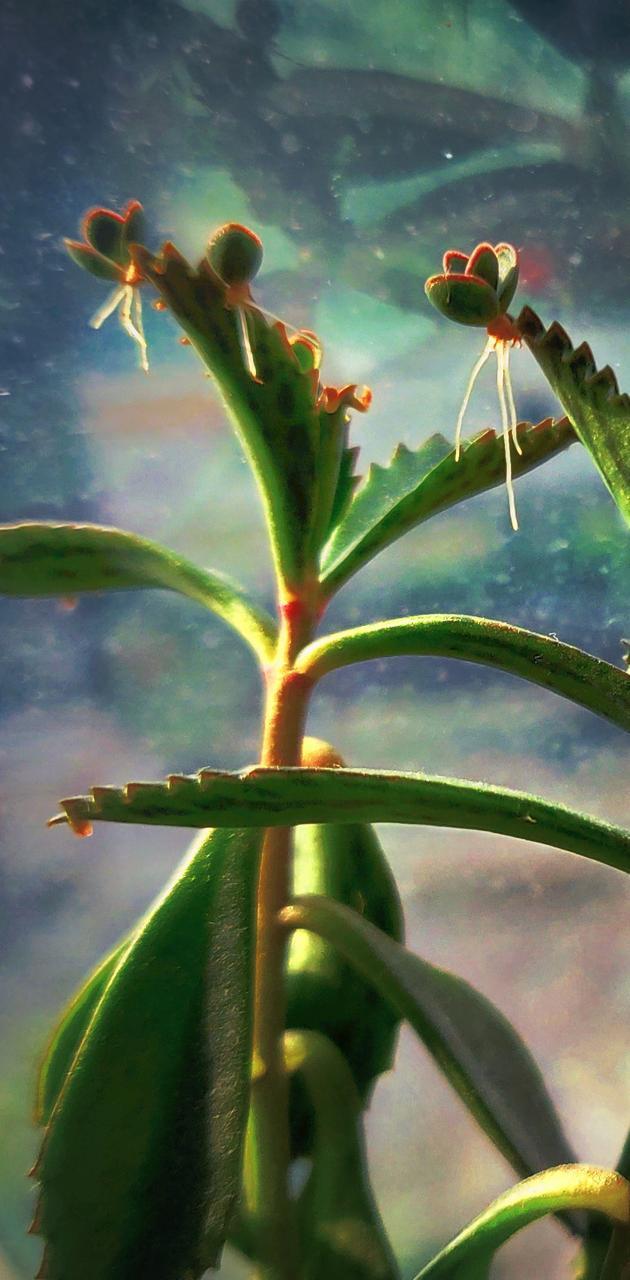 Plants beads