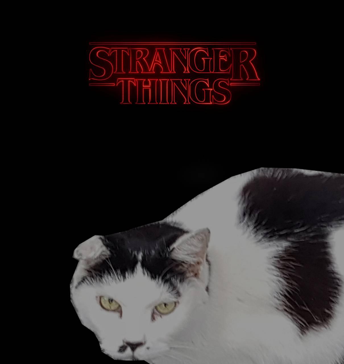 Stranger Catolf