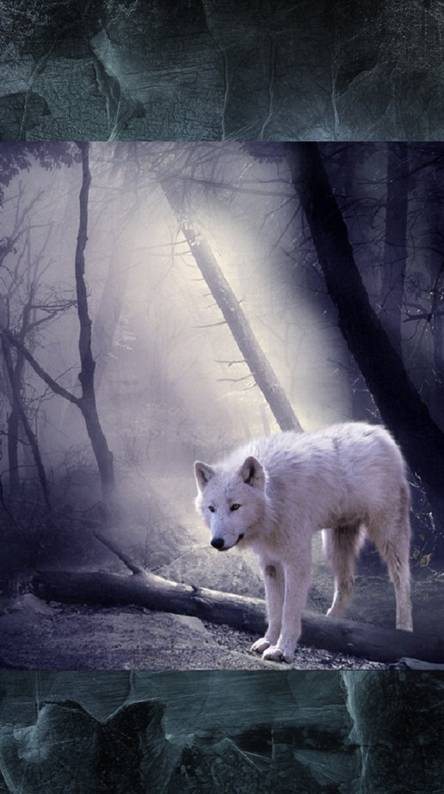 Lone wolf Wallpapers - Free by ZEDGE™