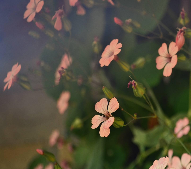 Flower Shades