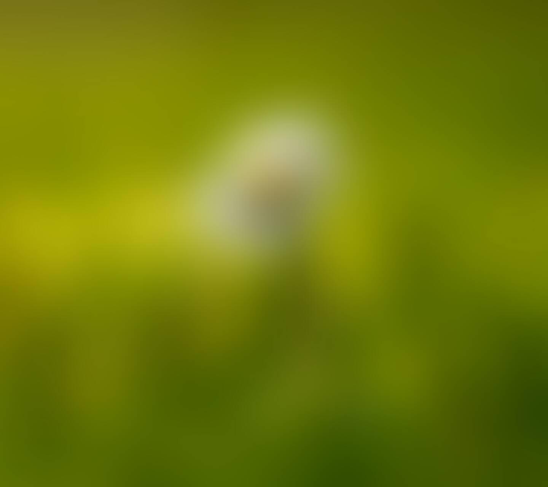 Blur flower HD