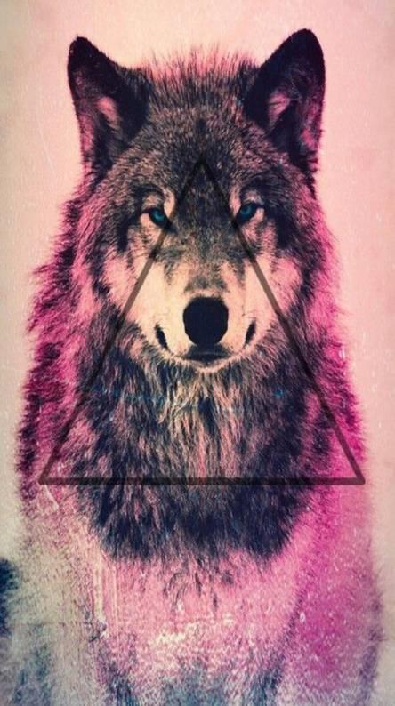 Wolf Prism