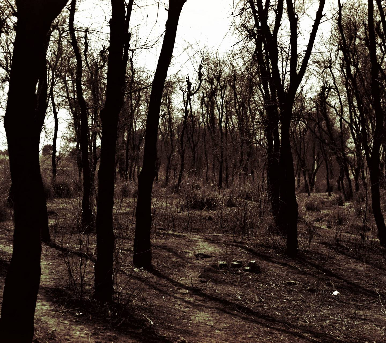 horror forest