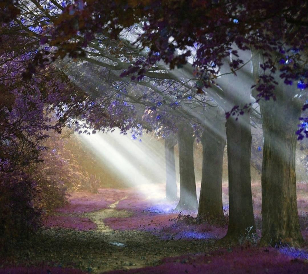 sunshine forest