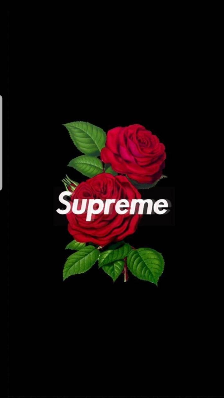 Supreme rose