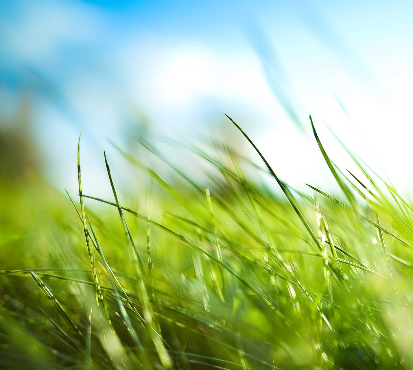 Green Grass Hd