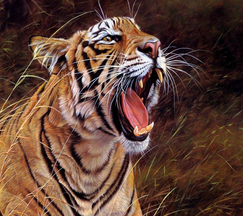Tiger Angry Wallpaper By Luckyman D5 Free On Zedge
