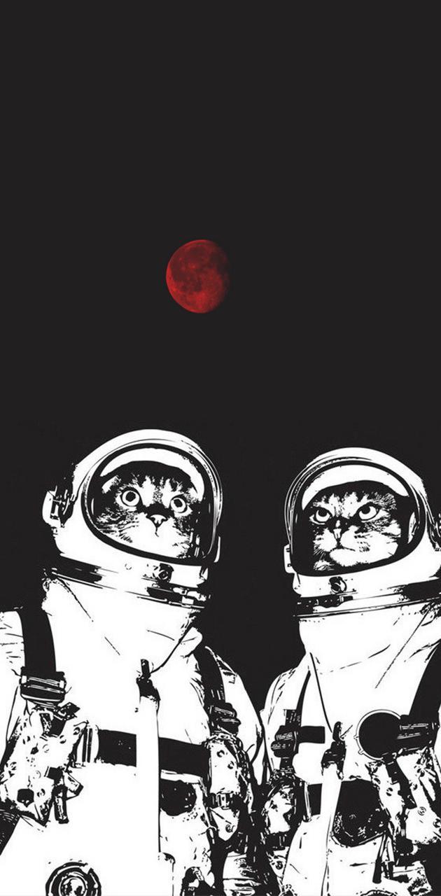 Astro Kittens