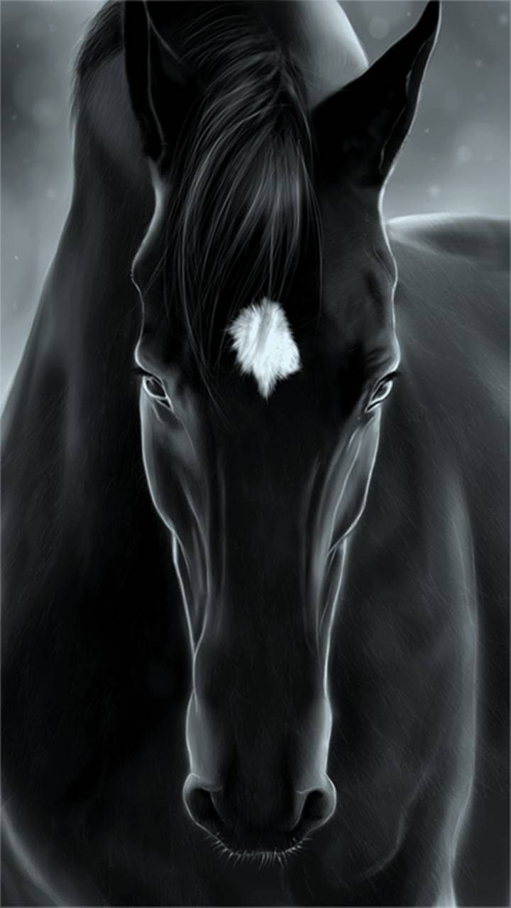 Black Horse Wallpaper By Perfumevanilla D1 Free On Zedge