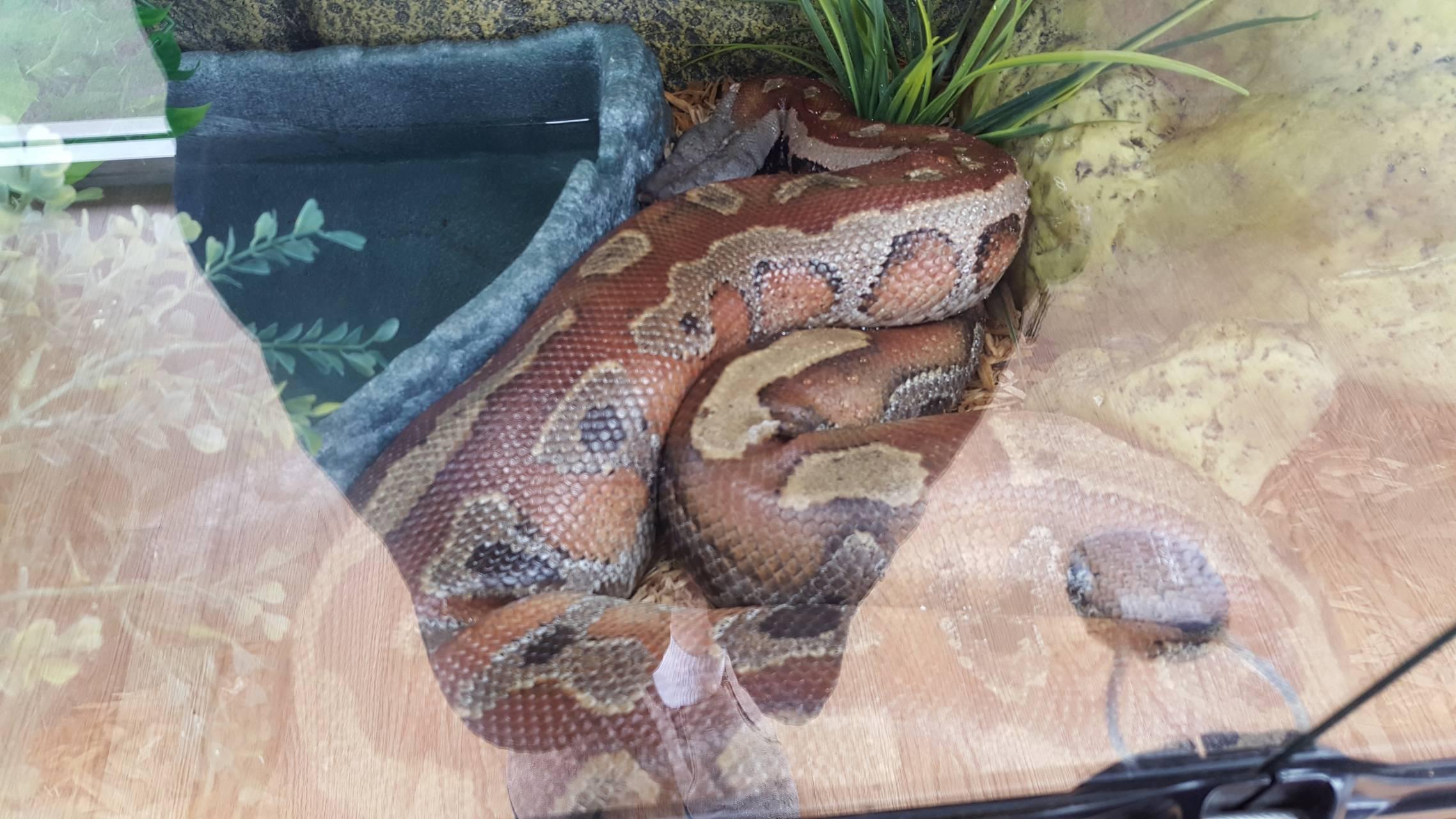 Big reptile
