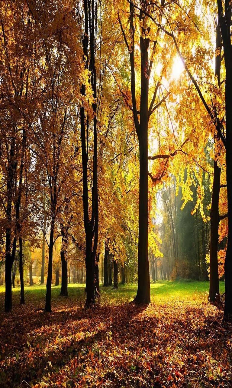 Goodby Autumn