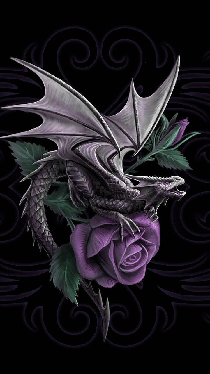 Dragon Beauty