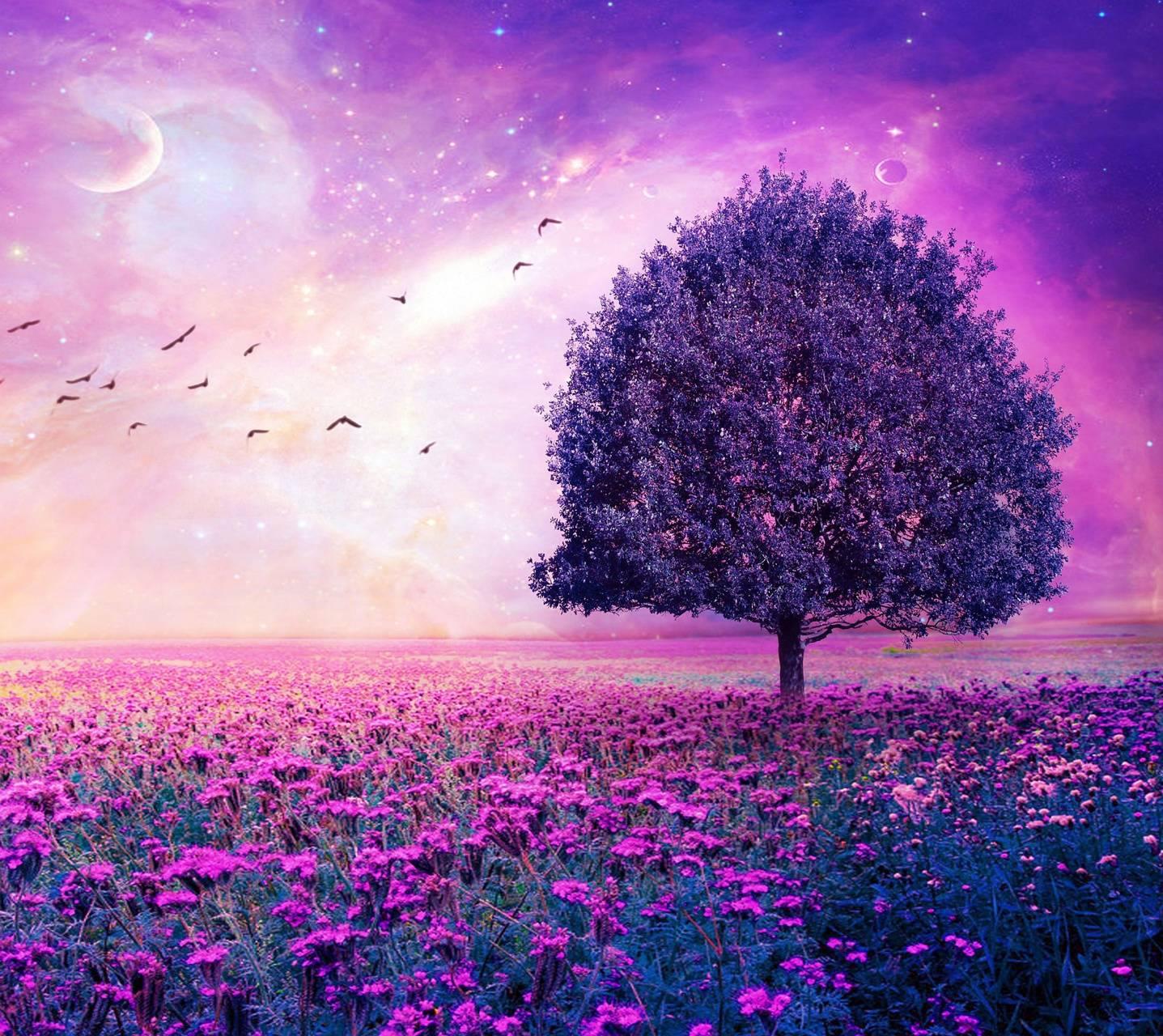 pink scenery hd