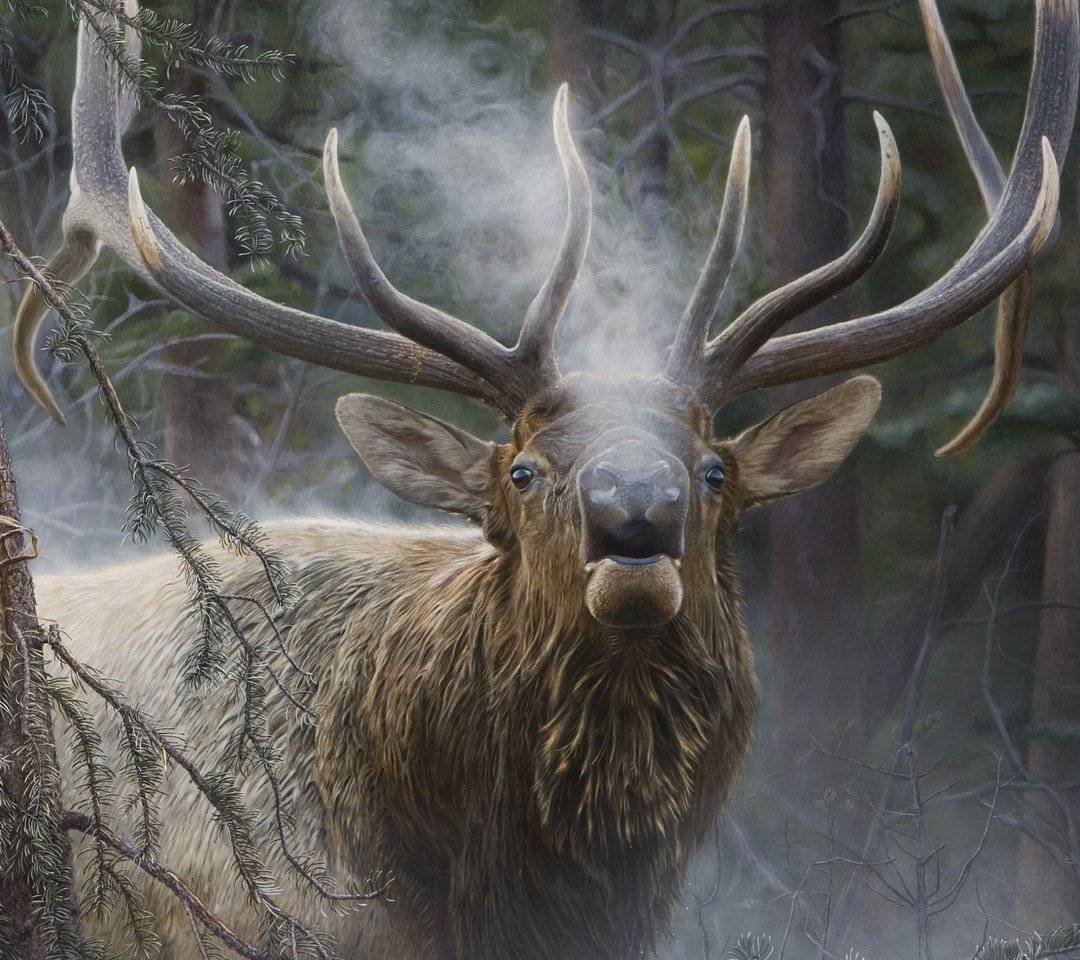 Bull Elk wallpaper by jami0850 - 97