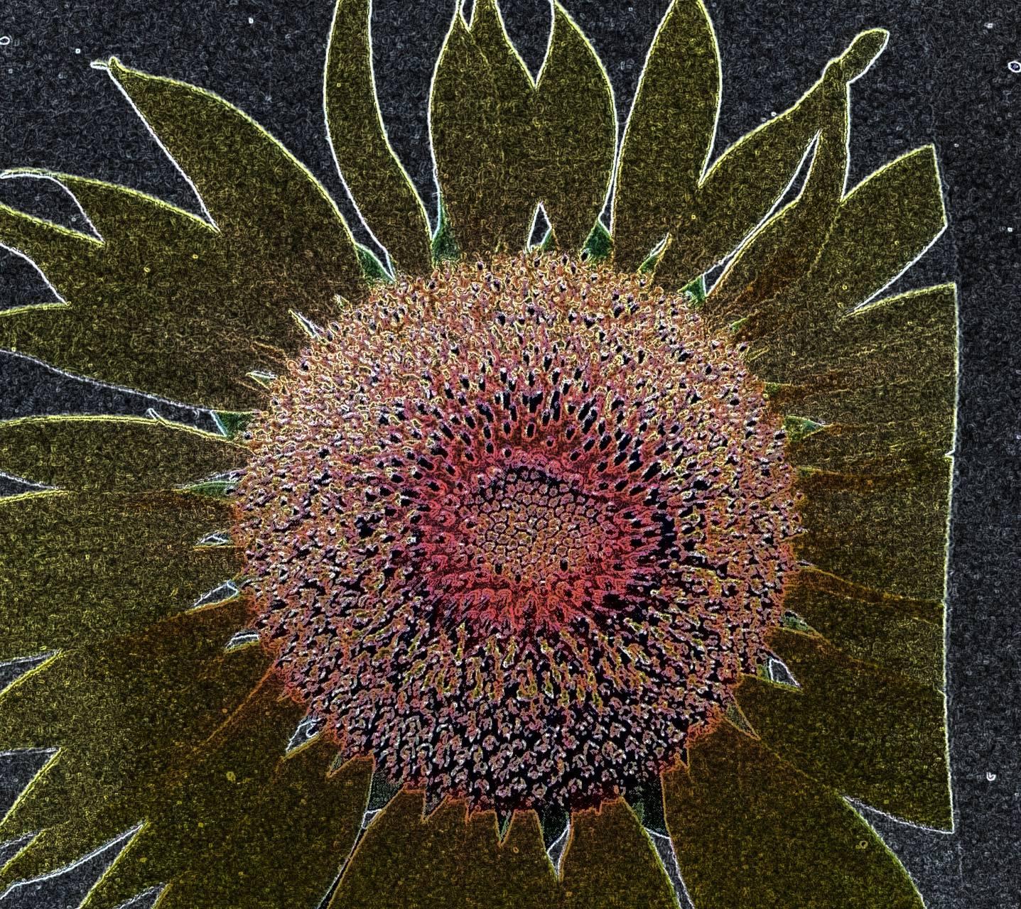 Sunflower neon