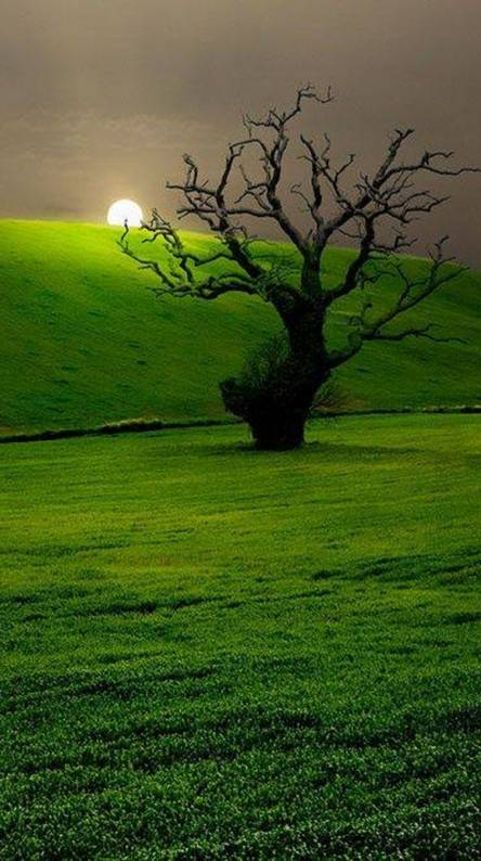 Death Tree and Life