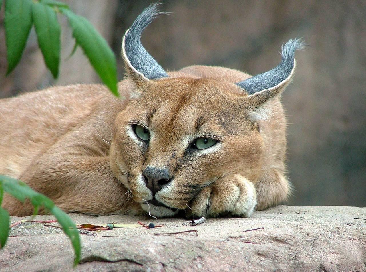 Прикольные картинки фото животных с надписями прикольными