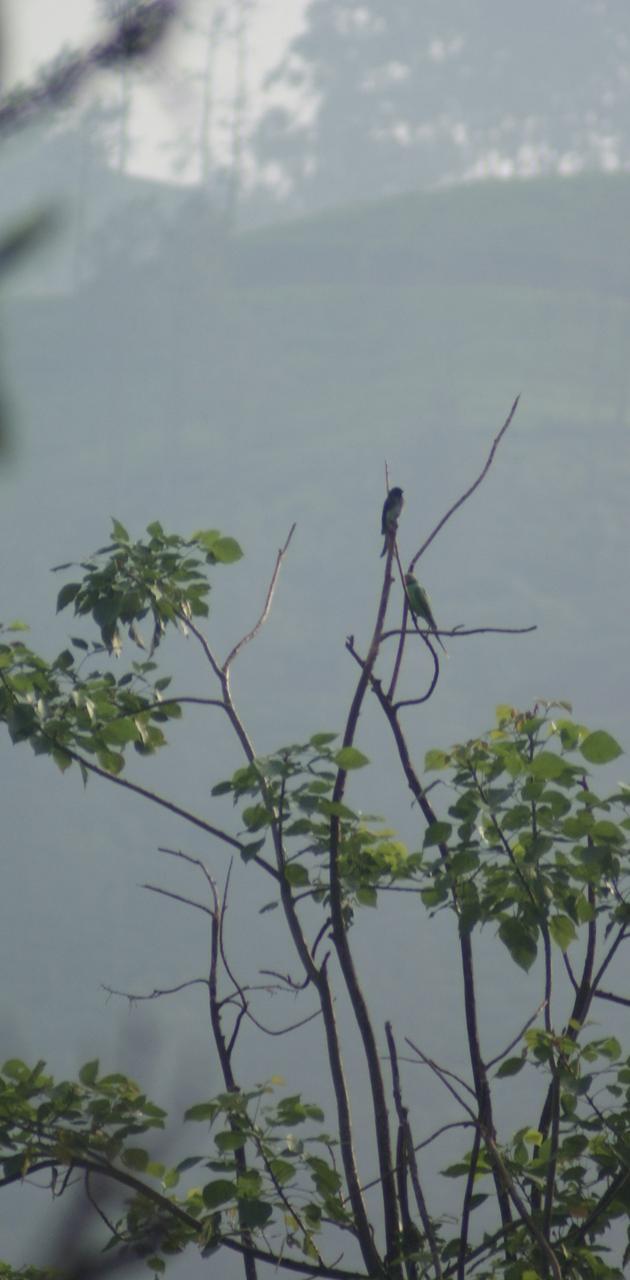Nature of srilanka