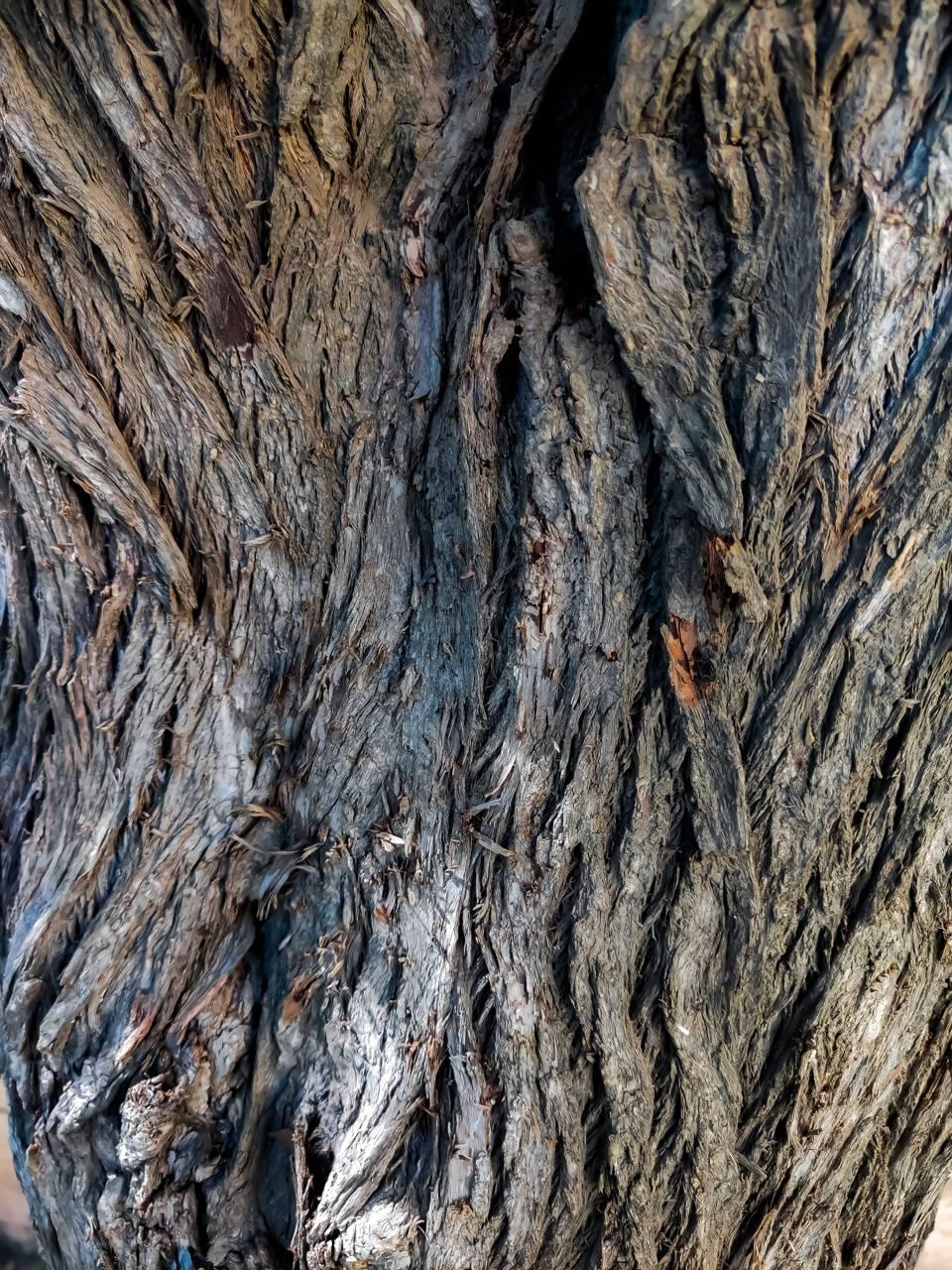 True Wood