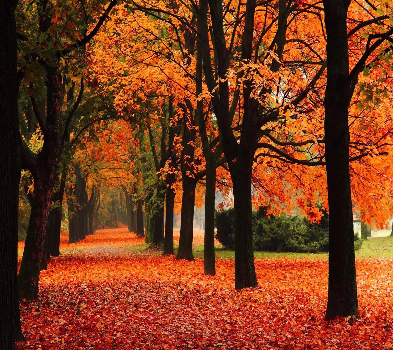 Alley Trees Autumn