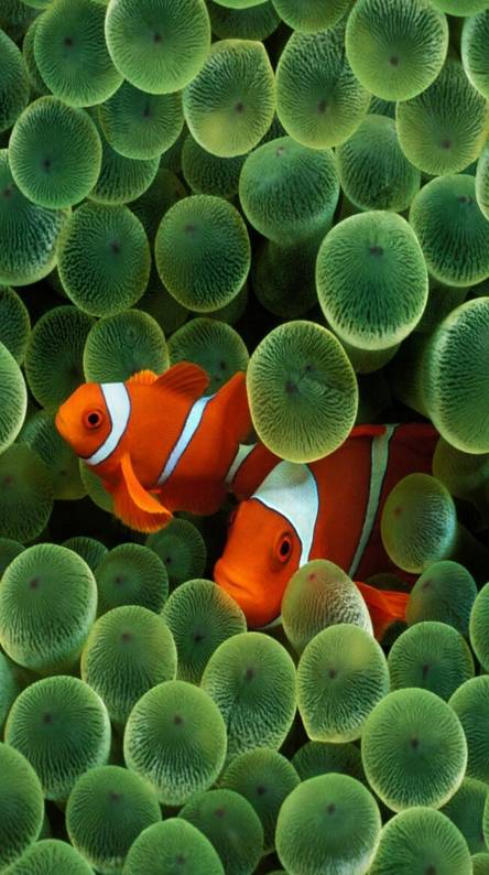 Fish- iPhone 6