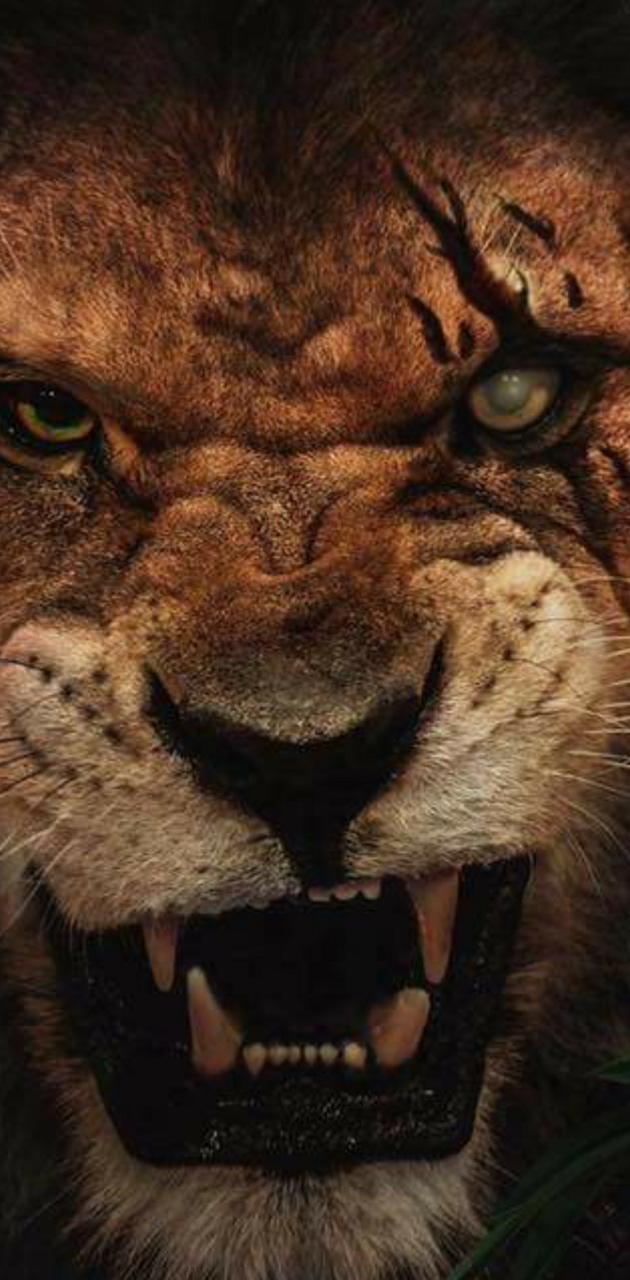 Lion scar