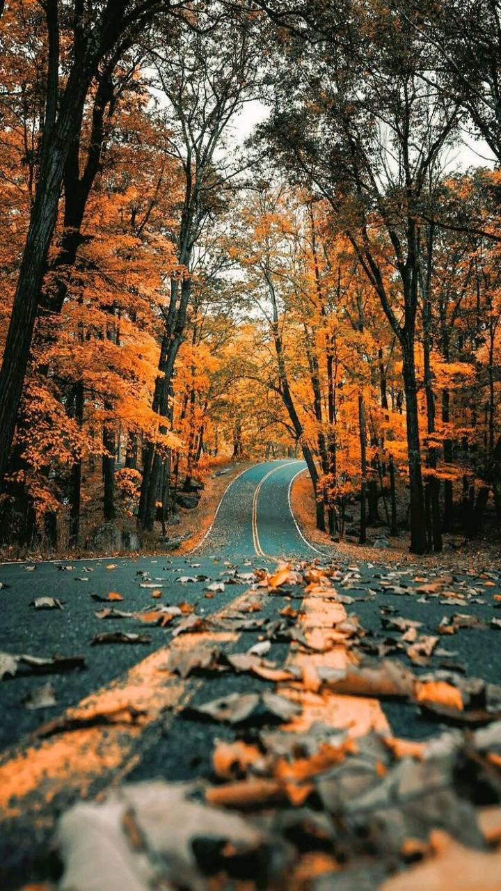 Road Fall