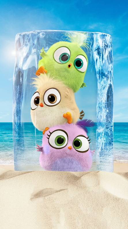 Cute Angry Birds Hd Wallpapers Download