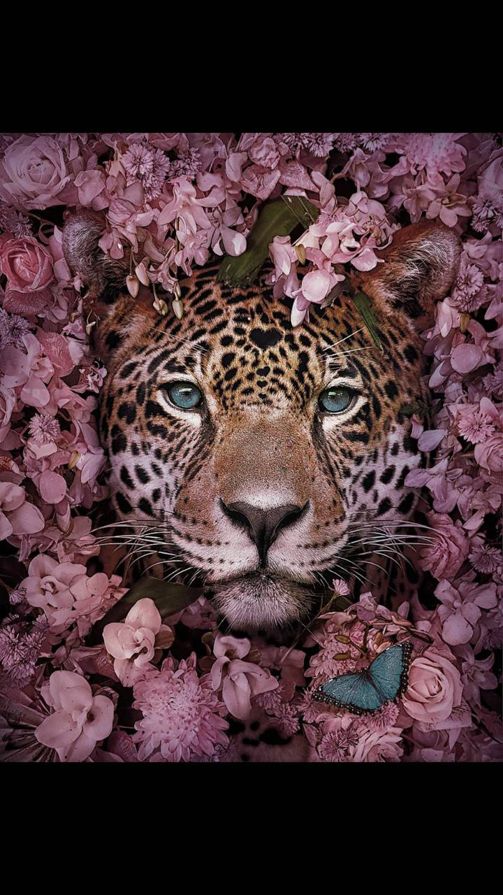 Wild cats and nature