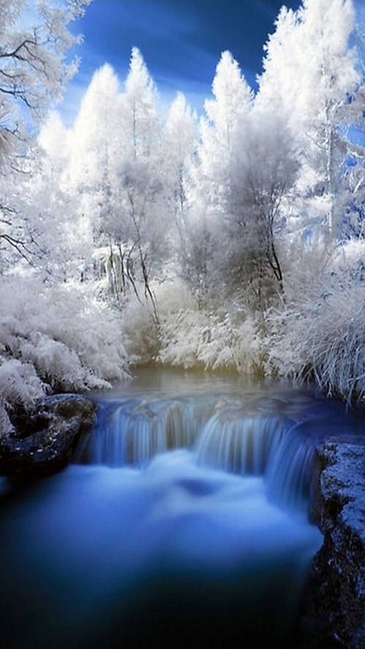 Waterfull Forest