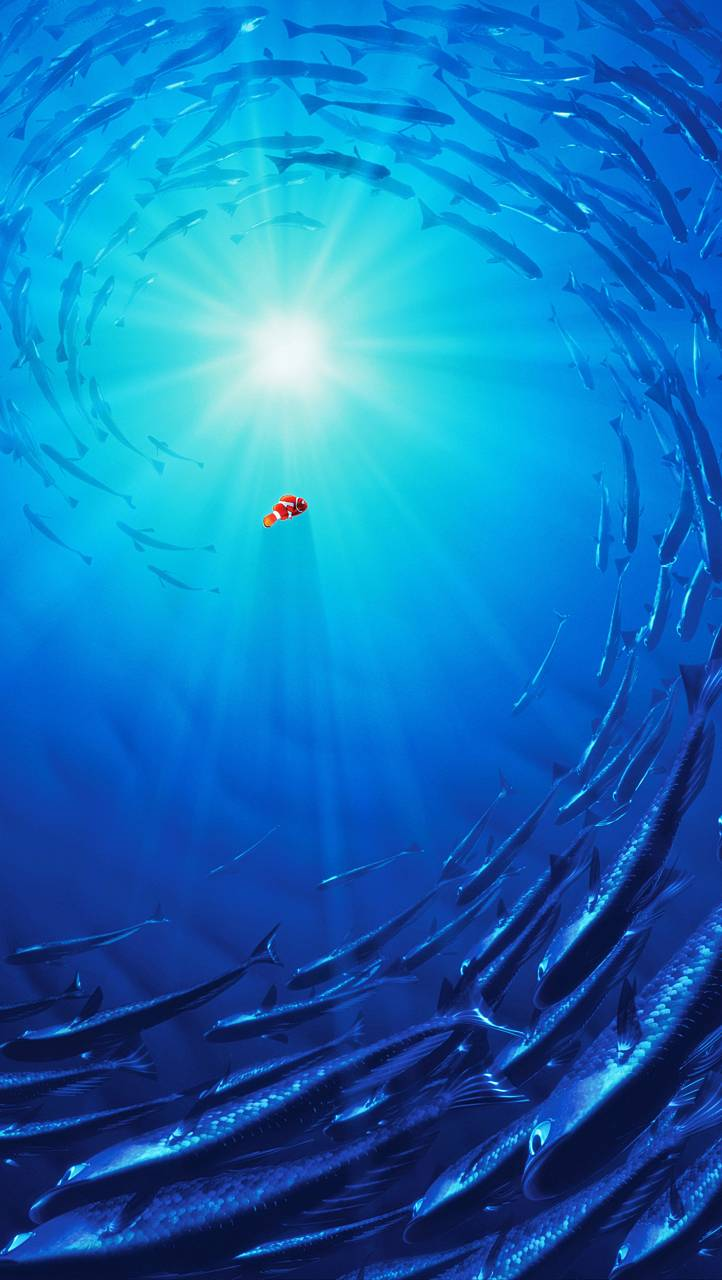 finding nemo wallpaperkaragranis - c3 - free on zedge™