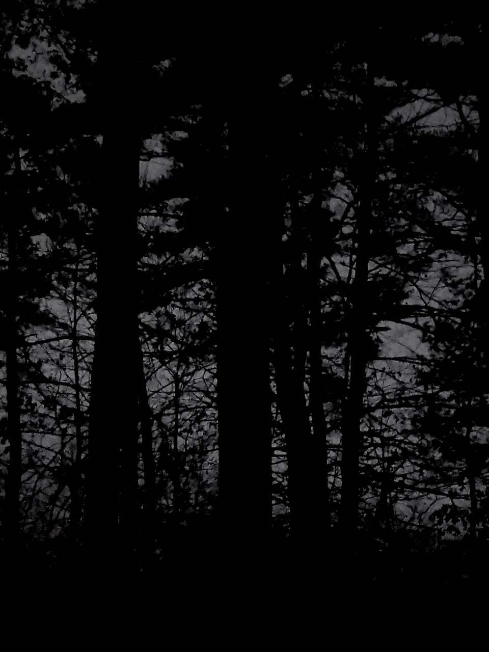 Black And White Forest Wallpaper Zedge Nature Wallpaper