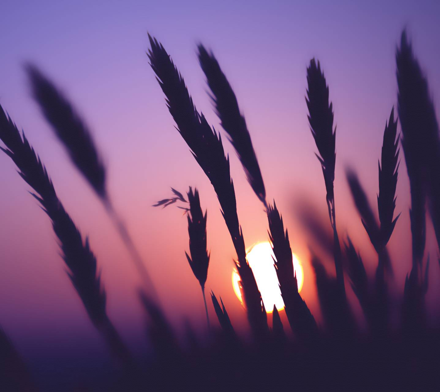corn sunrise