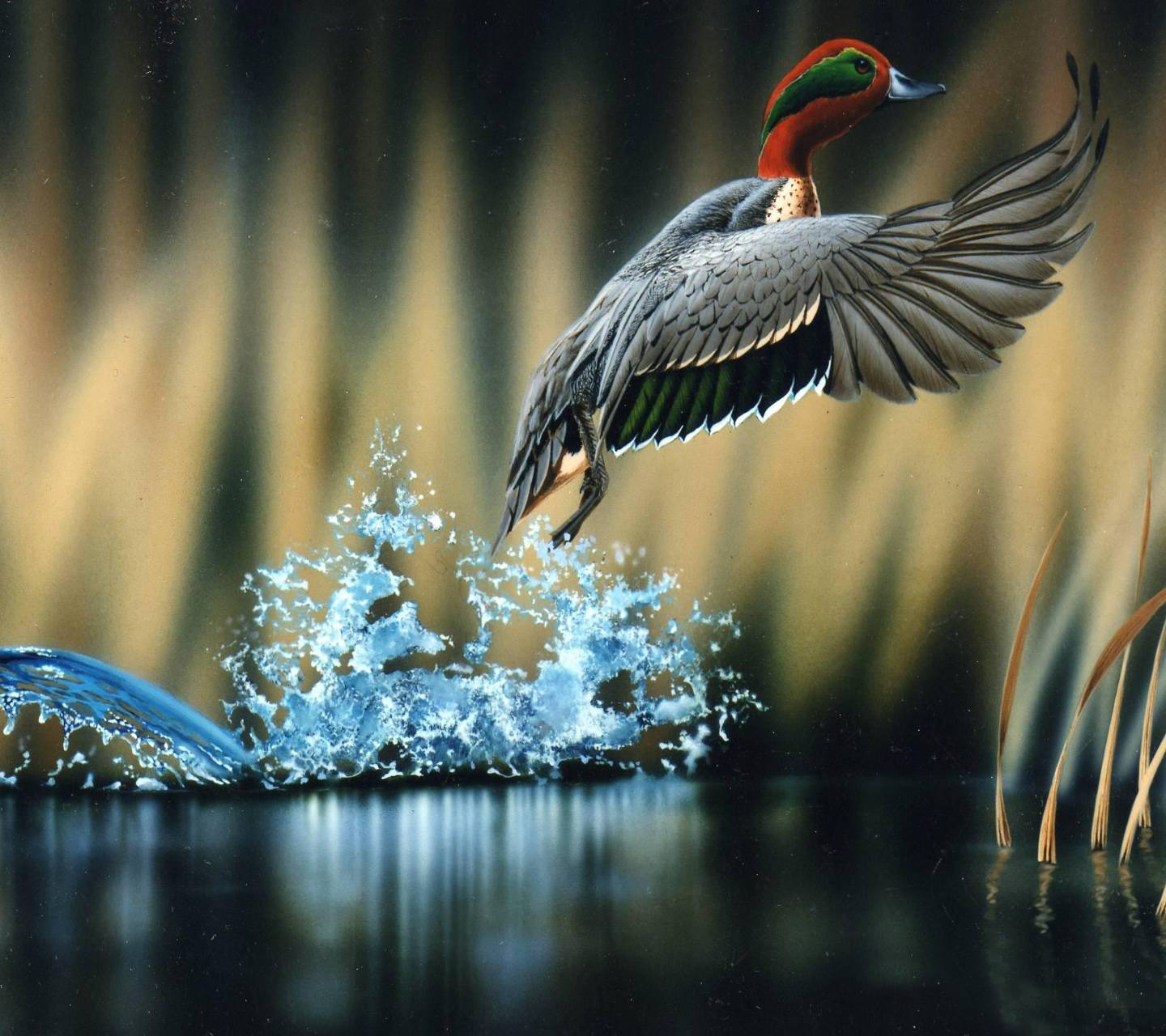 Kingfisher Fly Hd