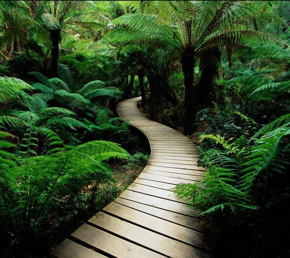 Jungle Boardwalk