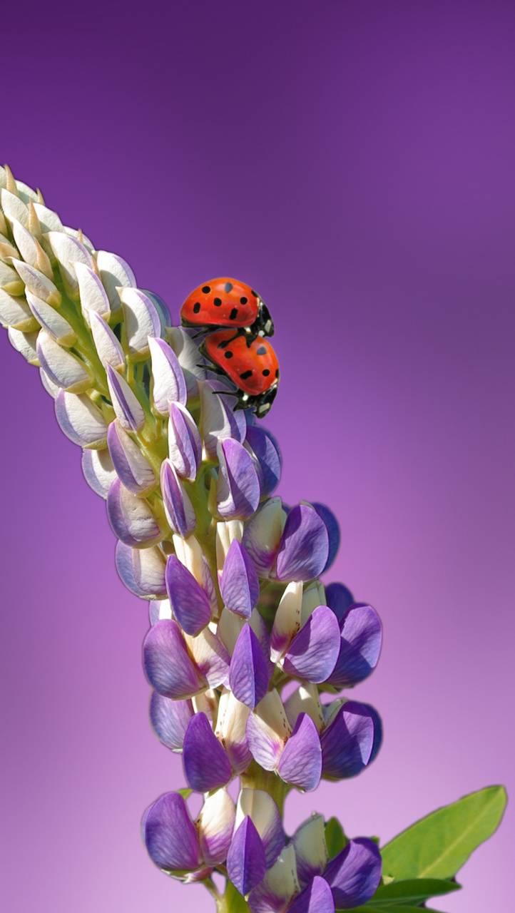 loving lady bugs