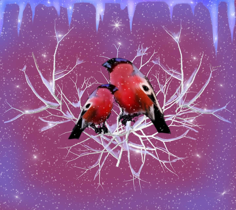 Two Birds 7