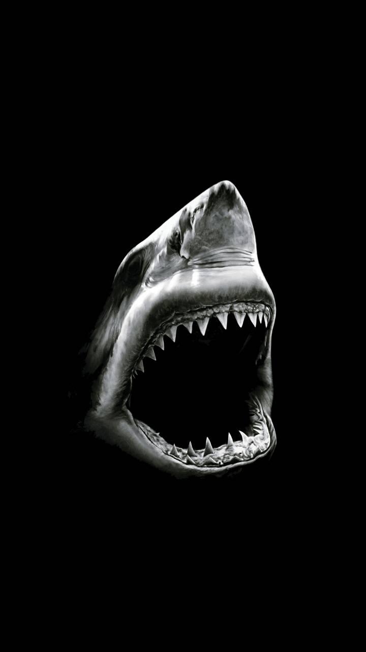 Black shark Wallpaper by dellaya - a1 - Free on ZEDGE™