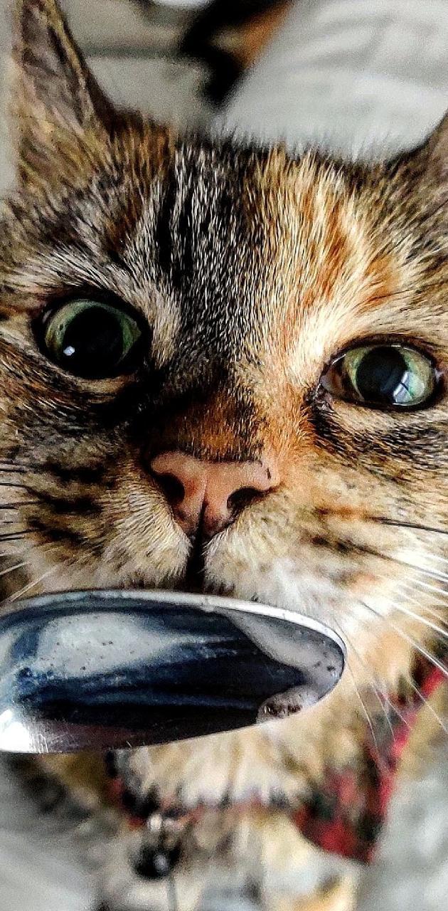 Cat Spoon