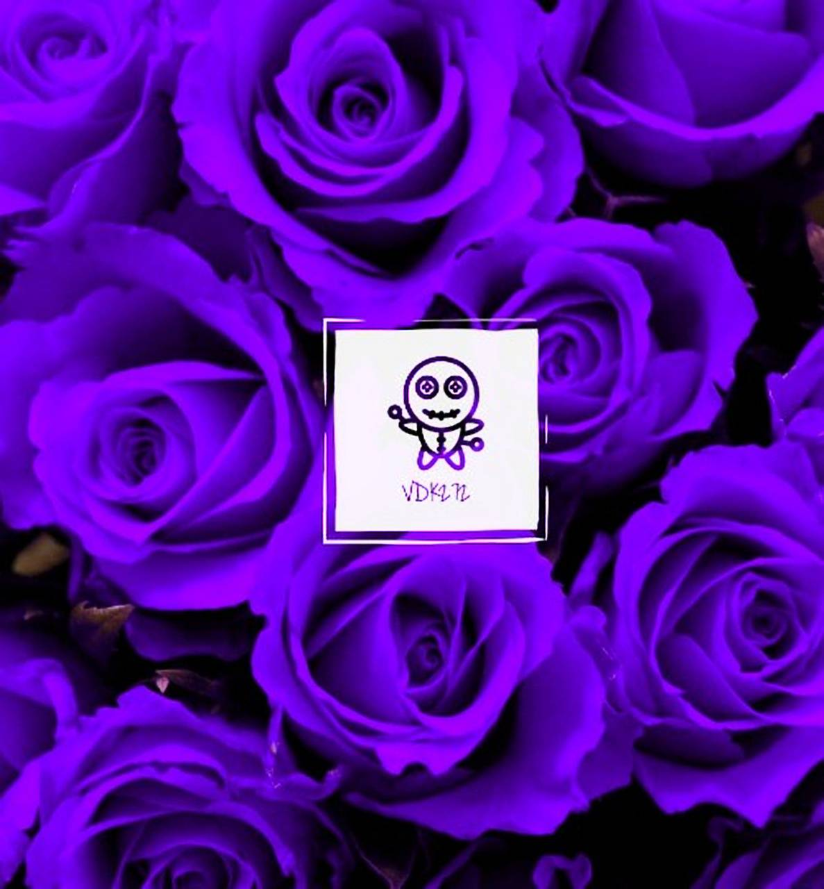 Vdk272 Purple Rose
