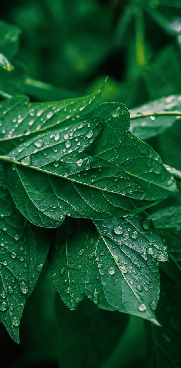 Saturation green