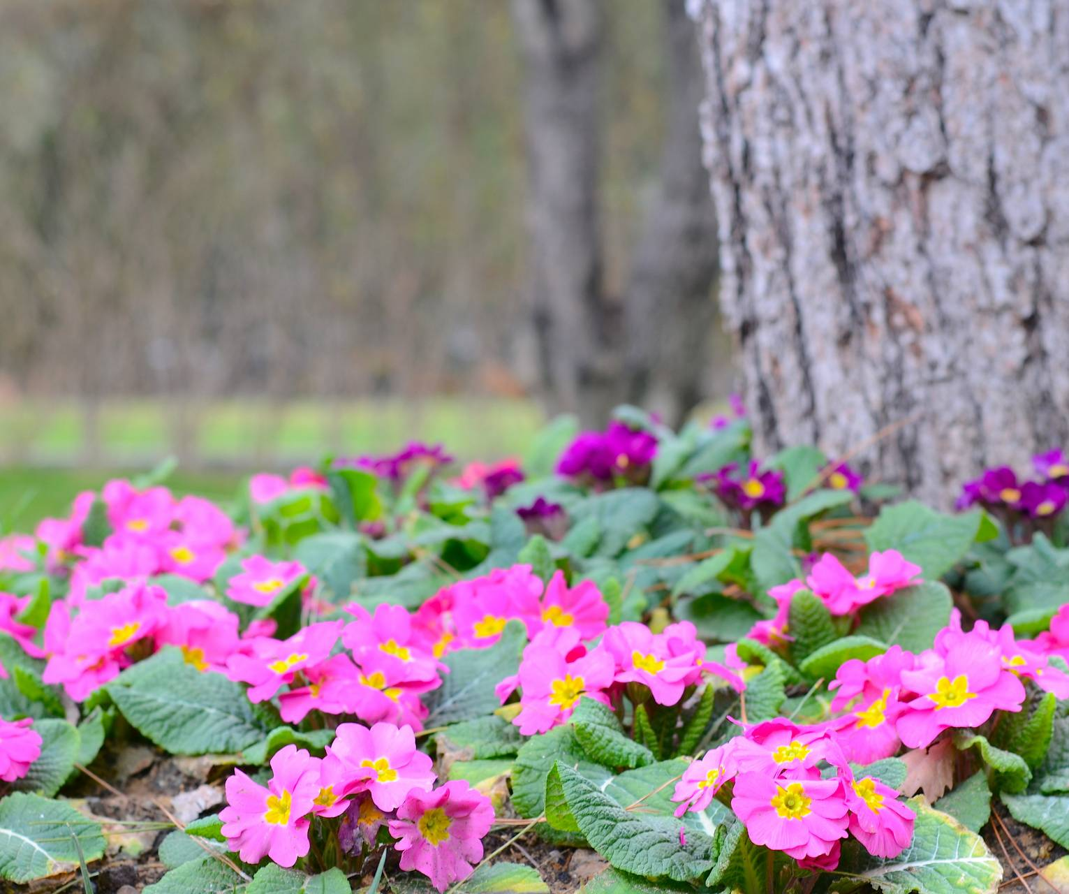Flowers and tree