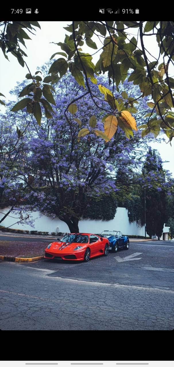 Ferrari y Shelby